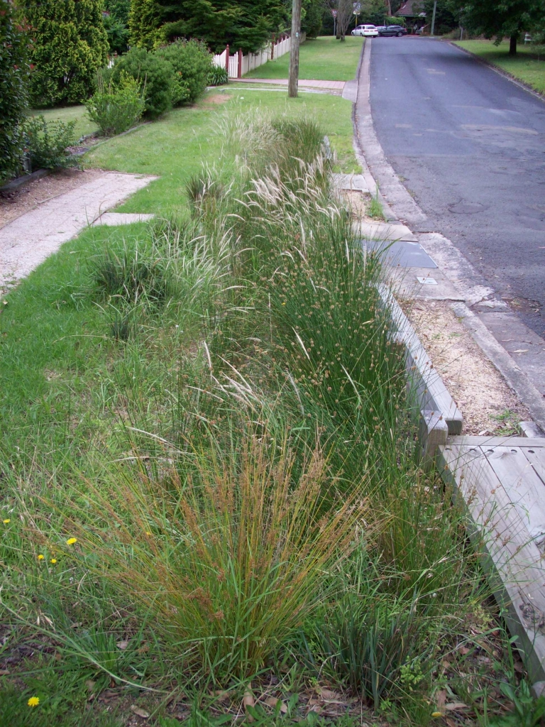 Kooloona Bioretention established (Source: Ku-Ring-Gai Council 2017)