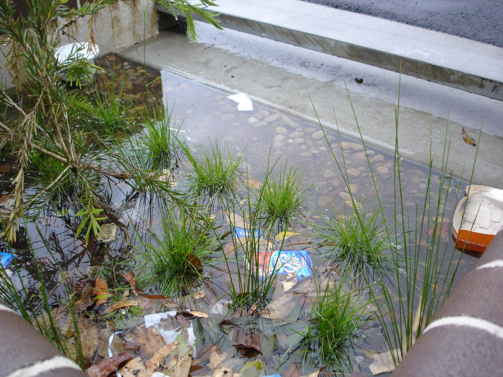 Normurra Bioretention post rain (Source: Ku-Ring-Gai Council 2017)