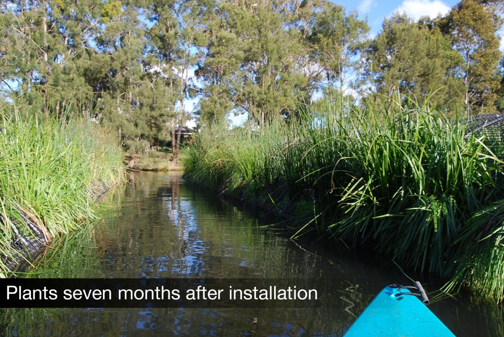 Floating Treatment Wetlands in Lake Annan (Source: Harris Environmental)